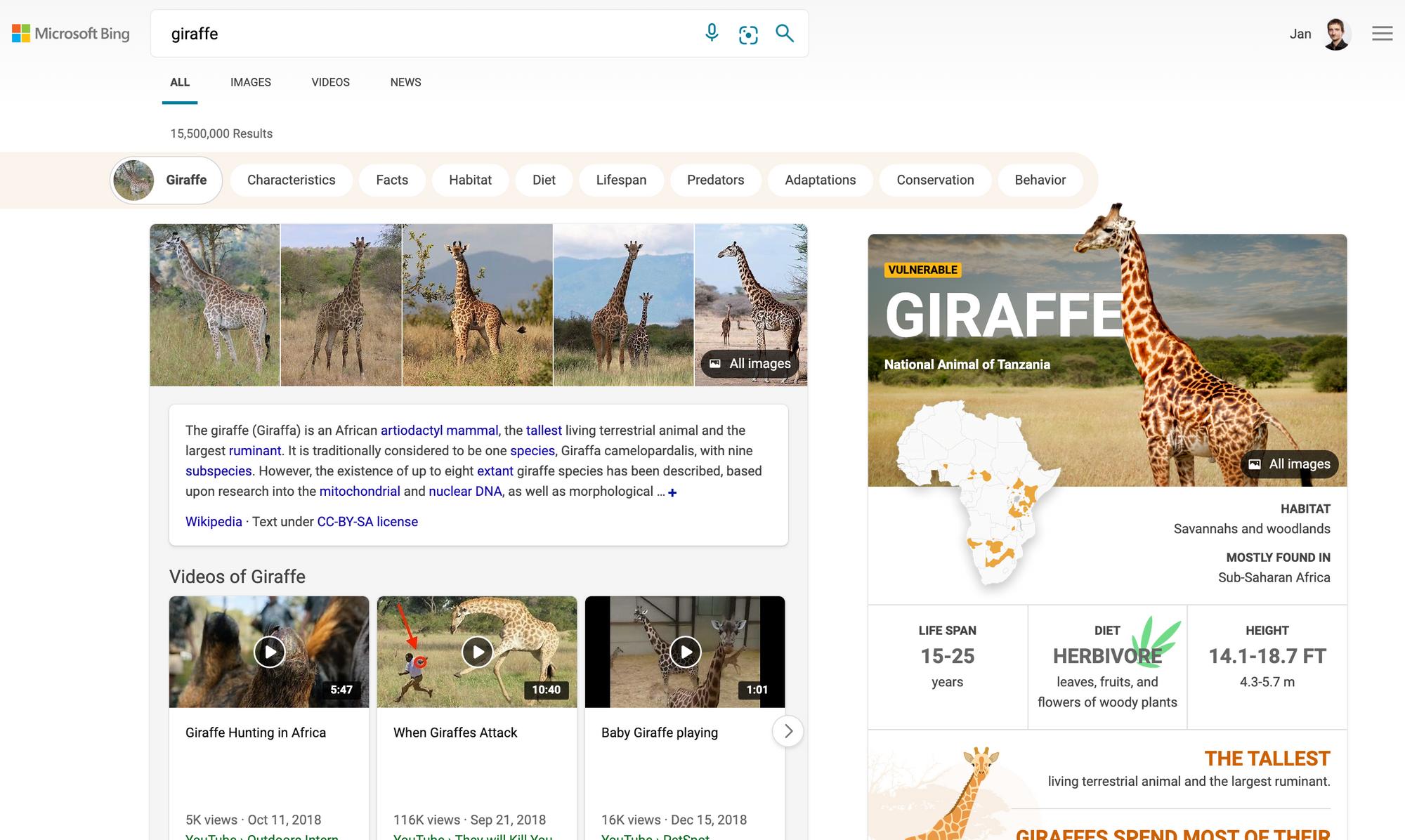 [Giraffe] - Bing Search
